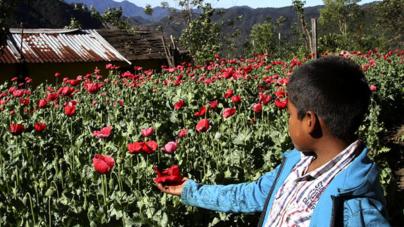 Efecto ESPEJO | Despenalizar las drogas en México, ¿ahora sí?