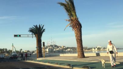 Hasta agosto sustituirán las palmeras secas del malecón de Mazatlán