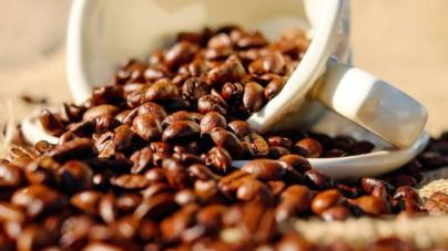 Arranca prueba piloto para cultivar café en Concordia