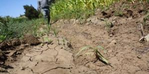 Julio fue el mes más seco en la historia de Sinaloa: Caades