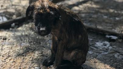 Huellita con Causa, IAP: ¡hay animales que también están damnificados!