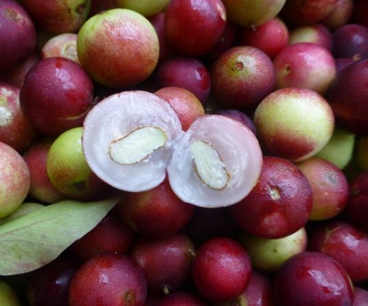 ¿Conoces el camu-camu? | Este fruto exótico podría ser la clave para combatir la obesidad