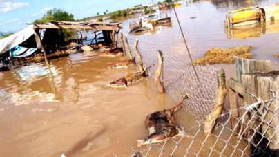 15 mil hectáreas y 15 mil cabezas de ganado, las afectaciones por la tormenta 19-E