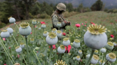 Efecto ESPEJO   Legalizar o no drogas en México, hora de decidir