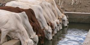 Gobierno de Sinaloa busca mejorar el estado zoosanitario en la ganadería