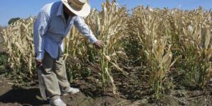 Sinaloa en alerta por heladas | ¡Va a estar muy frío esto!, advierte experto