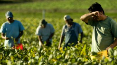Llama CEDH a denunciar a empresa agrícola que malpaga a jornaleros