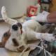Huellita con Causa invita a jornada de esterilización de perros y gatos este sábado