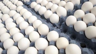 Avicultores sinaloenses señalan riesgos por consumir huevos importados de Estados Unidos