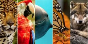 Las irreparables deudas de EPN | 10 especies quedaron en peligro de extinción después de su gobierno