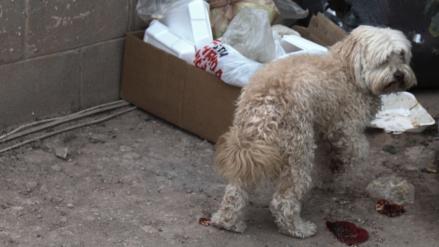 Ambientalista invita a crear santuario de mascotas en Culiacán