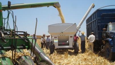 Efecto ESPEJO | Apoyo a maiceros, acierto de legisladores sinaloenses de Morena