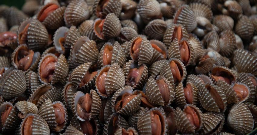 COEPRISS levanta cierre temporal precutorio de moluscos en Altata