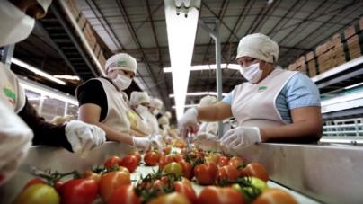 Con más de 28 mil nuevos empleos Sinaloa se recupera en crecimiento: Sedeco