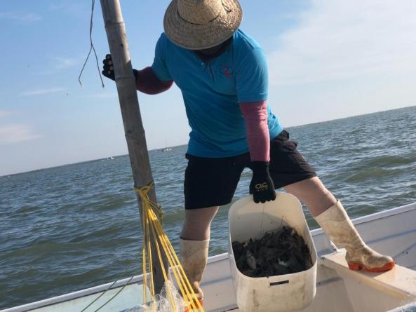 En el mar   Abren veda del camarón; sacan millones para apoyar a pescadores