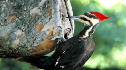 Los nuevos Dodos | La diversidad biológica en peligro de extinción