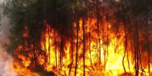 ¡Fuego!   Inicia temporada de prevención y combate de incendios forestales en Sinaloa