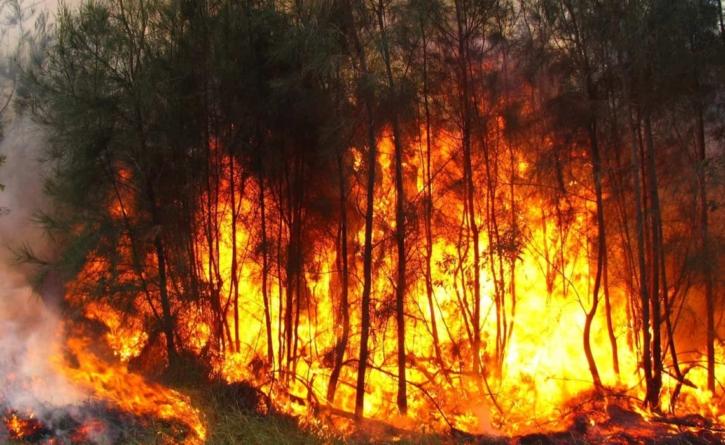 ¡Fuego! | Inicia temporada de prevención y combate de incendios forestales en Sinaloa