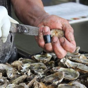 Manjares del mar | Buscan que moluscos sinaloenses lleguen a más partes del mundo