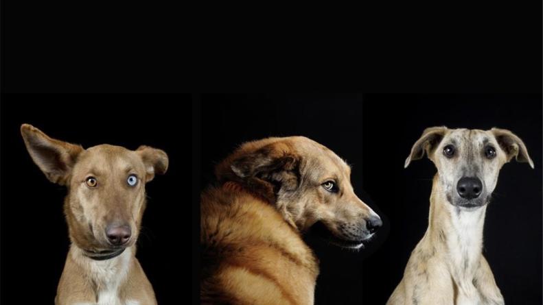 Inicia Semana Nacional de Vacunación Antirrábica Canina y Felina 2019