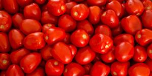 Dumping de tomate | autoridades americanas se resisten al diálogo
