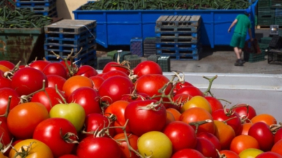 Efecto ESPEJO | El tomate sinaloense, mercancía política de Donald Trump