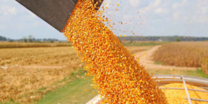 Precio base de 65 a 70 dólares por tonelada de maíz, exigen diputados del PRI
