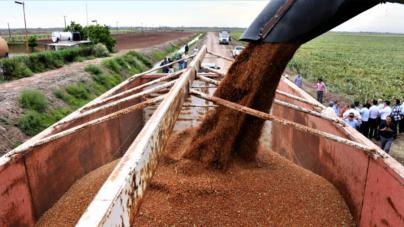 Alimentos Concentran el 61% de Exportaciones Industriales de Sinaloa