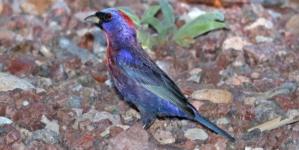 Asegura Profepa 19 ejemplares de aves protegidas en Culiacán