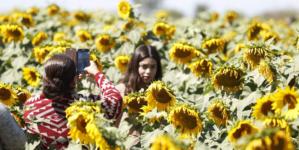 Pueblos mágicos están 'haciendo la tarea' en materia de atracción turística: Pérez Barros