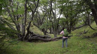 ¿Vacaciones como medicina?| Éste país ya receta periodos de descanso en el bosque para atender enfermedades