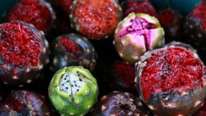 ¡Llegaron las Pitayas! | El fruto arraigado en las raíces de Sinaloa