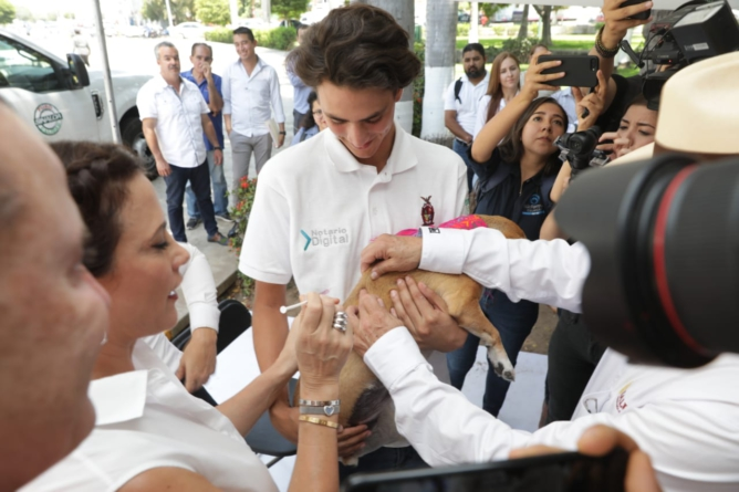 Esterilización canina y felina en Sinaloa son ejemplo a nivel nacional: Quirino Ordaz Coppel