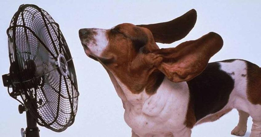 Cuida del calor a tus mascotas | Altas temperaturas pueden causarles problemas de salud