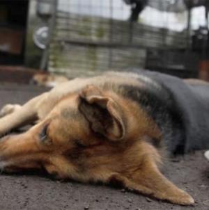 ¿Alguno de tus vecinos está envenenado animales? Coepriss te dice qué hacer