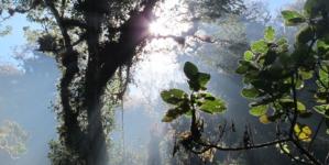 Día del Árbol | 70% del territorio nacional aún son superficies arboladas