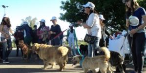 Parque Las Riberas te invita a su 'Carrera perrona' para ayudar a los perros callejeros