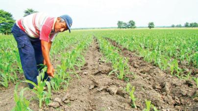 Sinaloa, estado con mayor crecimiento económico en el primer trimestre del 2019