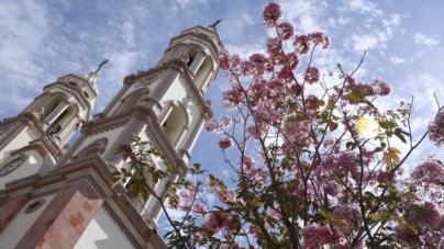 Invitan al Festival de las Amapas y nuestros árboles regionales
