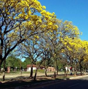 Arborizar Culiacán: la tarea de ciudadanos y gobierno para reducir las temperaturas