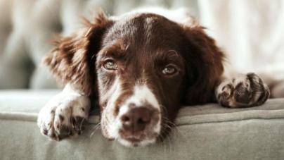 LO LEGAL ES | Hasta 2 años de prisión por envenenar mascotas