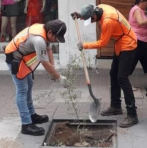 Con 7 mil árboles, continúa Ayuntamiento con reforestación de Culiacán