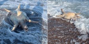 Culpan a derrame de Grupo México por la muerte de especies en el Mar de Cortés