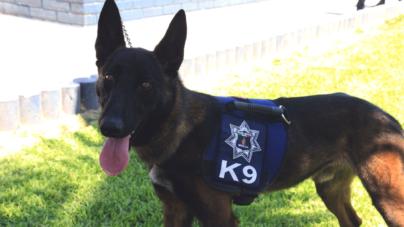 Reconocen a Bruno, el perro 'antidrogas', por su fuerza y resistencia para combatir el crimen