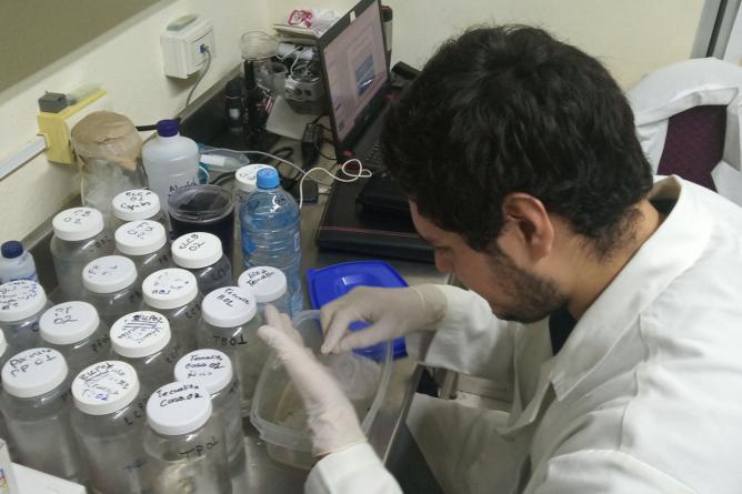 Sinaloenses son inmunológicamente más resistentes a las picaduras de mosquitos: Investigador