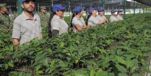Con 250 mil árboles, iniciará Sedesu la reforestación de Sinaloa