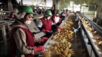 Empleos precarios | Disminuye 5.1% ingreso laboral de los sinaloenses, advierte economista