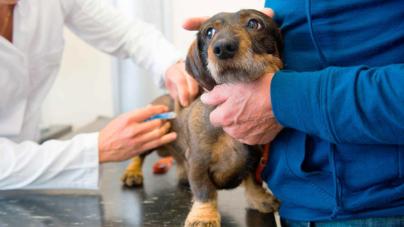 Diabetes Canina | Una realidad que padecen 1 de cada 500 perros en el mundo