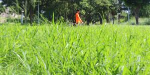 Trabajo inacabable | Falta de personal mantiene lleno de maleza al Parque las Riberas