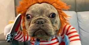 Halloween perruno | Polideportivo Valle Alto invita a fiesta de disfraces para mascotas
